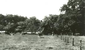 Wolink boerderij